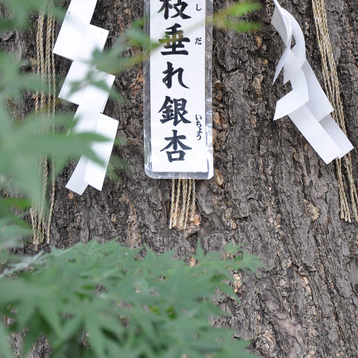 lezione giapponese copertina